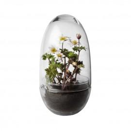 Serre en verre Grow clear